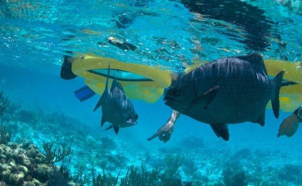 onder-water-kijken-2